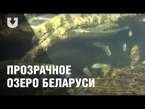 Самое прозрачное озеро Беларуси