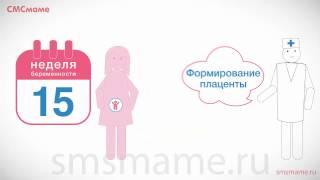 15 неделя беременности: фото и видео