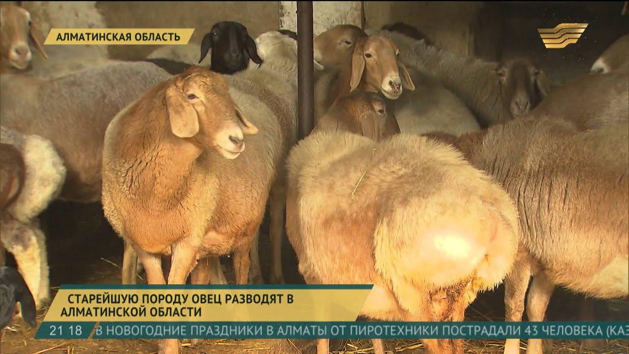 Наш интернет-магазин предлагает купить корм для коз и овец с доставкой в москве и московской области. Недорогая цена. Большой выбор и.