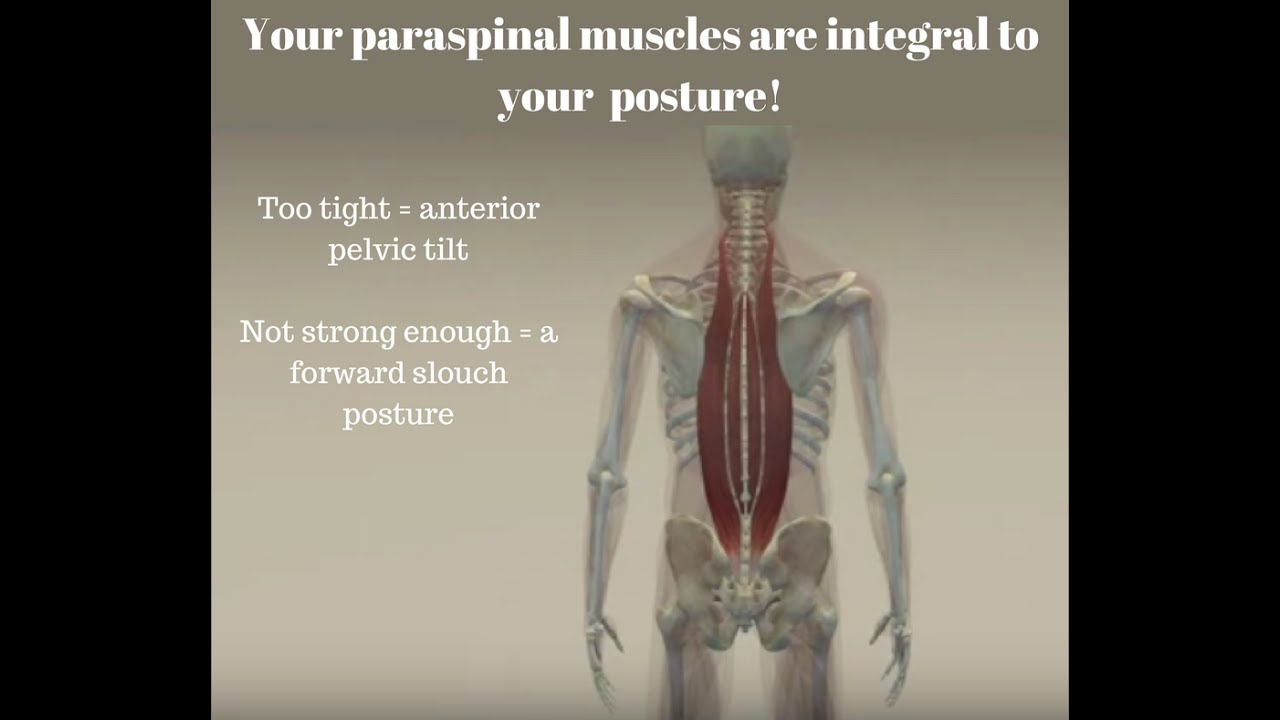 How your paraspinal muscles impact your posture - YouTube