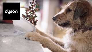 mischievous pets the dyson v6 cordless vacuums have got you covered official dyson video