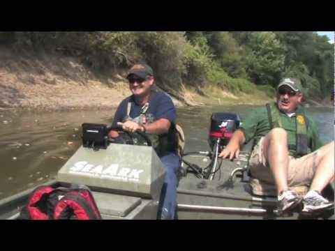 Видео: прыгающая рыба