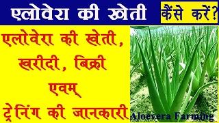 alovera ki kheti in hindi || एलोवेरा का खेती, एलोवेरा की खरीदी, बिक्री एवम् ट्रेनिंग की जानकारी
