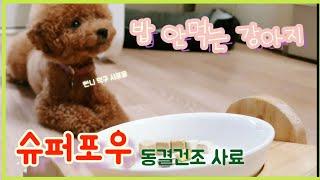 밥 안먹던 강아지가 달라졋다 |슈퍼포우| 동결건조사료