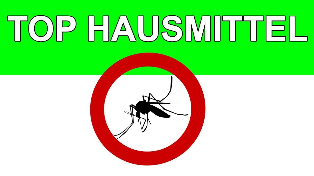 die besten hausmittel gegen stechmÜcken 2017 - youtube - Mücken Im Schlafzimmer