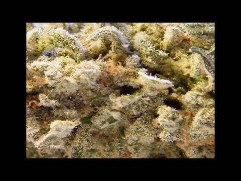 Dope Smoker - Marijuana (2016) (Full Album)