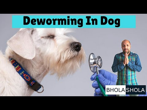 Pet Care - Deworming In Dogs - Bhola Shola