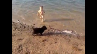 Собака   друг человека  Игра, прикол - the dog is man's best friend the game is a joke