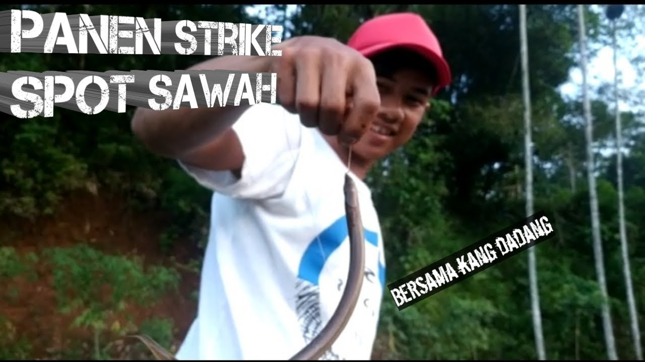 Mancing belut masih spot sawah..... || Eel fishing - YouTube