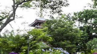 あじさいの寺(本土寺)2013.06