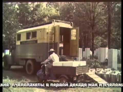 Советское пчеловодство The Soviet beekeeping