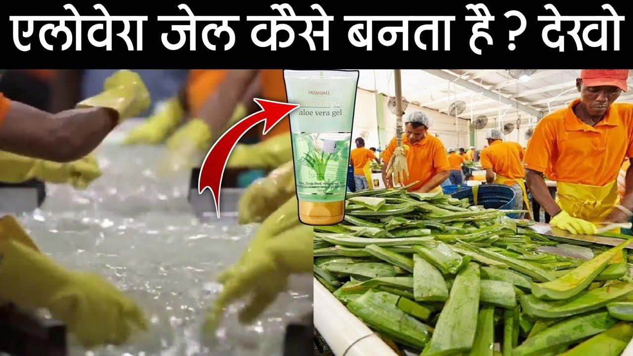 फैक्ट्री में एलोवेरा जेल कैसे बनता है?   Aloe vera Gel Making Factory