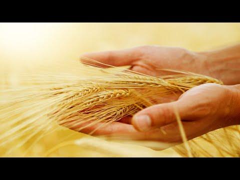 Portait de Nicolas Supiot, paysan - boulanger