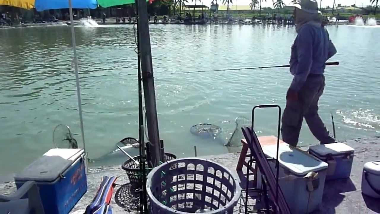 釣客釣到的魚秤重回收----大鵬灣釣魚烤肉休閒農場 - YouTube