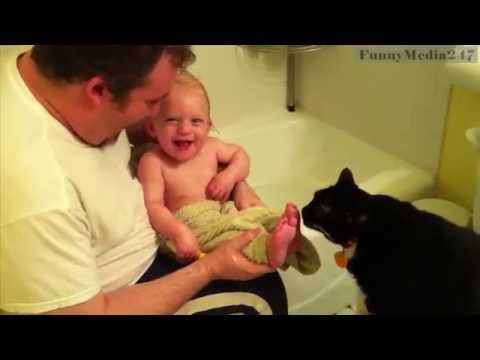 Top 70 funniest cat videos