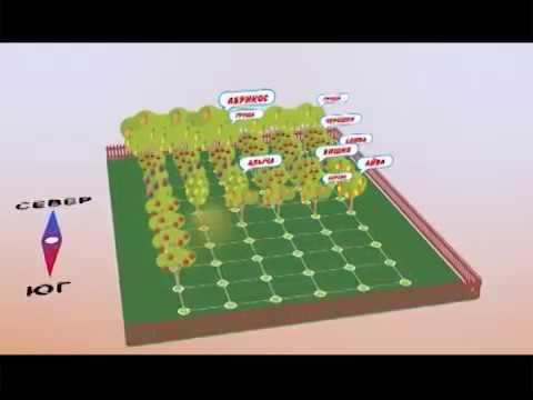 Как правильно разбить сад на участке схема