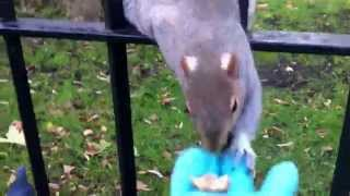 Handing some nuts to Mr Squirrel