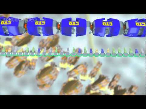Animation: The Central Dogma
