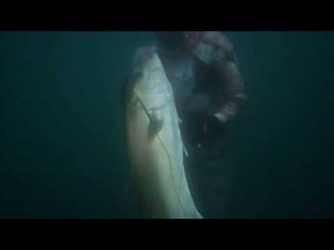 Alexandria Spearos - 15 kilos Amberjack - open water..........صيد هاربون انش 15 كيلو