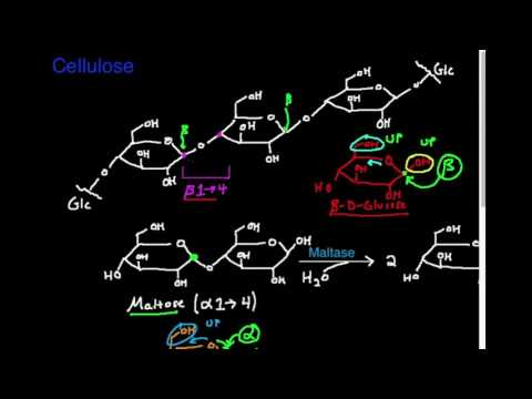 Polysaccharides: Cellulose