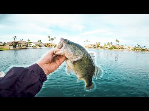 BIG FISH Out Of URBAN Arizona POND!! Pond Hopping!