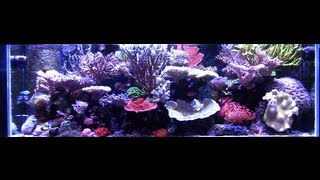 Seth's Beautiful 180 Gallon Reef Saltwater Aquarium