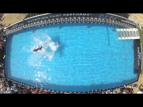 Diving Dog Winner - 2014 Purina® Pro Plan® Incredible Dog Challenge Eastern Regionals