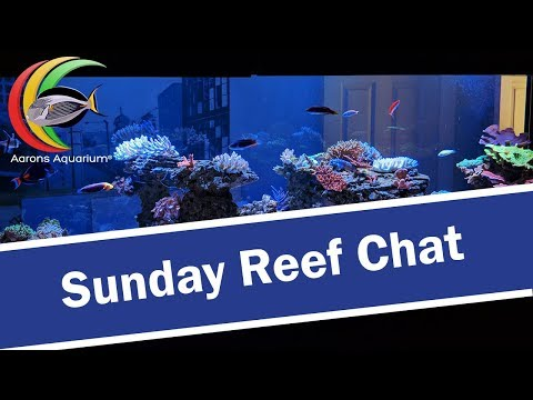 Sunday Reef Chat