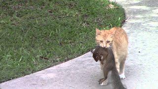 Самые смешные животные Приколы с котами и собаками 2021 20