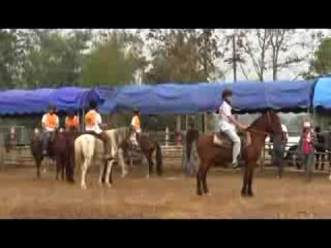 การแข่งขันขี่ม้ามาราธอน รร บ้านบัว