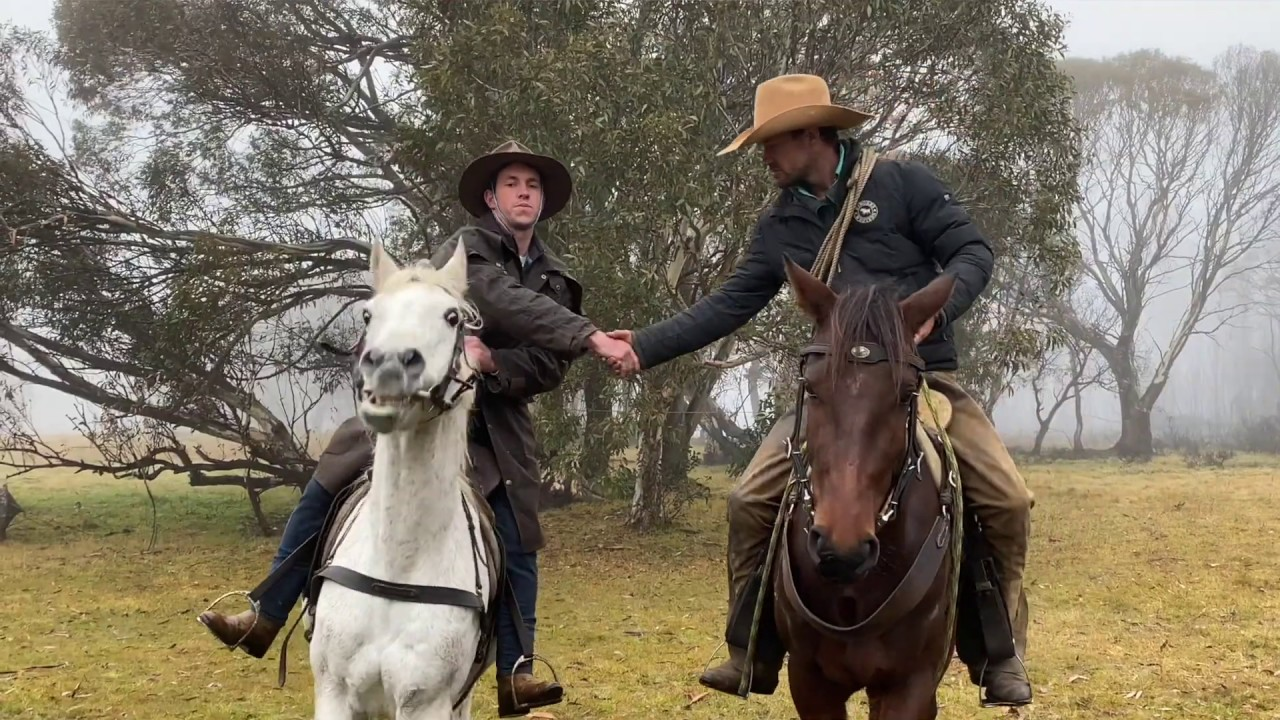 Brumby lovers unite to save Australian horses from being shot