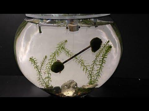 How to Set Up The Most Efficient Aquarium