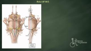 Master Brainstem Neuroanatomy (Part 2)