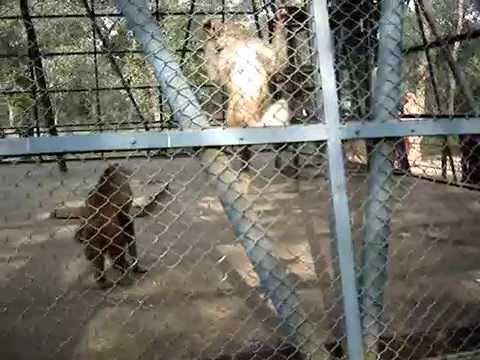 Mirpur Zoo