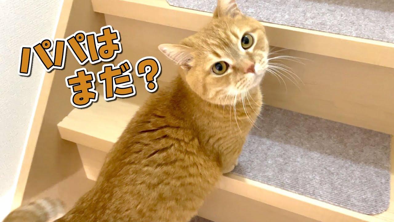 夜はみんな一緒じゃなきゃ寝ない飼い主想いで優しい猫!