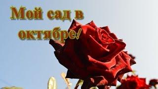 Осень в Молдове и мои цветы  Мой сад в октябре(Осень в #Молдове красива!https://www.youtube.com/watch?v=YTcRPUIXV98 Но первый заморозок немного попортил цветы в моём #саду...., 2016-10-17T08:02:48.000Z)
