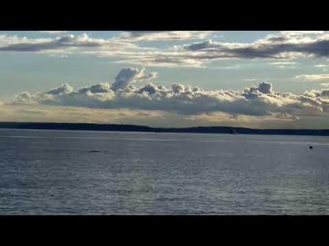 Best Place to View Seals,Elliot Bay, Puget Sound, Seattle WA 012