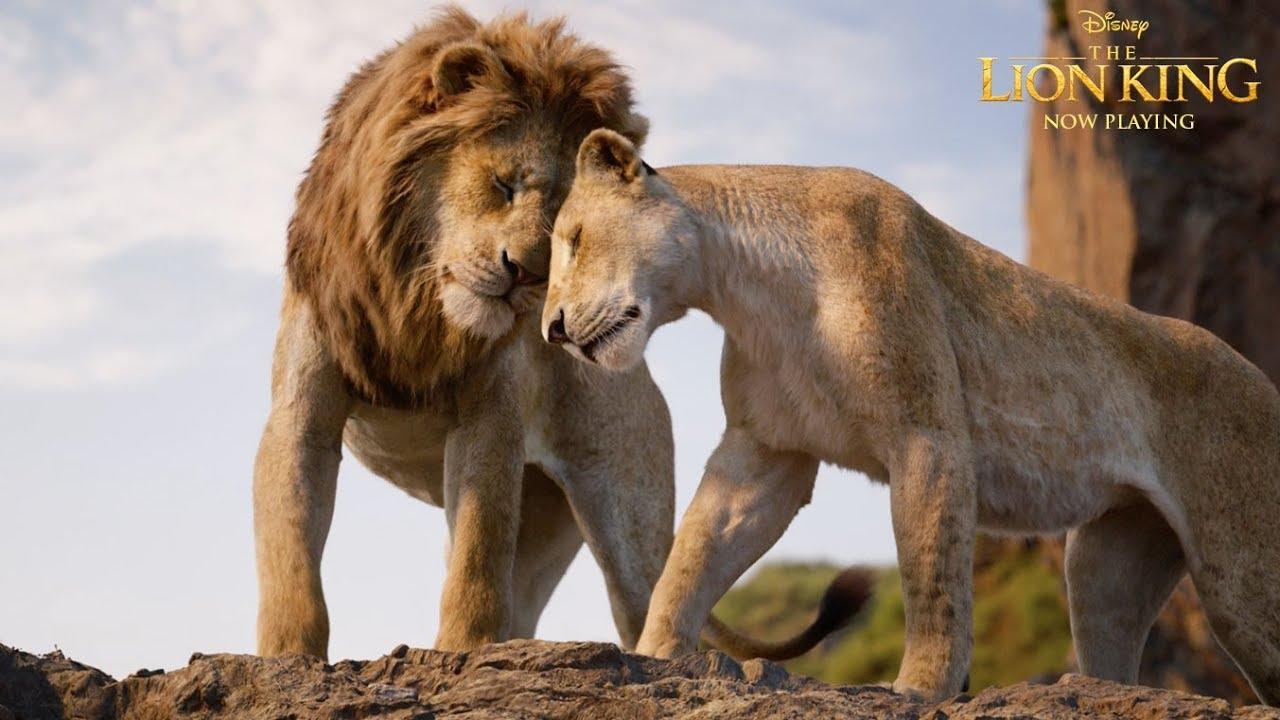 lion king # 1