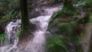 暴 雨 水 瀑 山 徑 松 羅 湖 之 修 煉 第 六 回