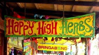 Ein Dorf im Rausch: NIMBIN | Hippie-Dorf im Regenwald
