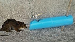 Water Pipe Rat Trap- ทำกับดักหนู จากท่อน้ำ