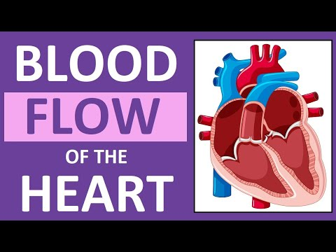 blood-flow-through-the-heart-|-heart-anatomy-and-physiology-nclex