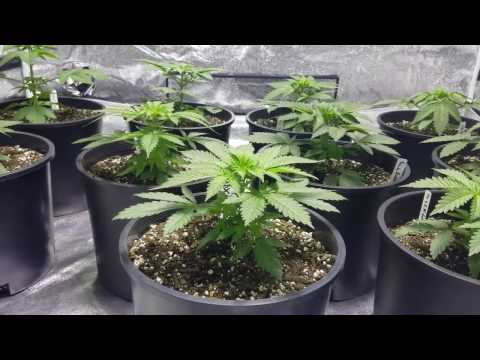 EP #49 Day 21 From Seedling Week 1 Veg 2 Winners and Shout Outs 🤗
