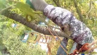 видео Удаление деревьев в Красногорском районе