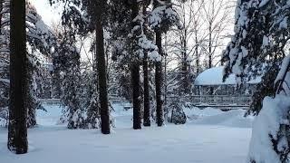 Новый Зимний Поезд Аллегро