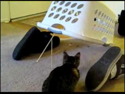 Ловушка на кошки своими руками
