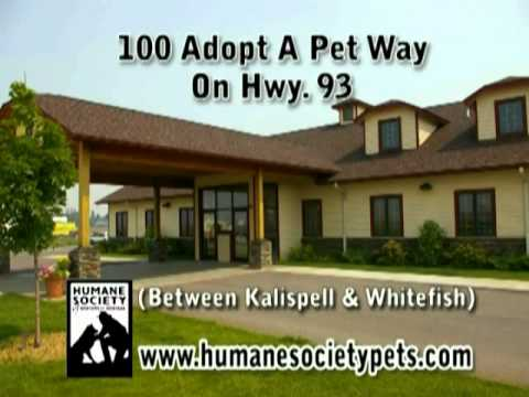 Humane Society - Donate to Help Homeless Pets