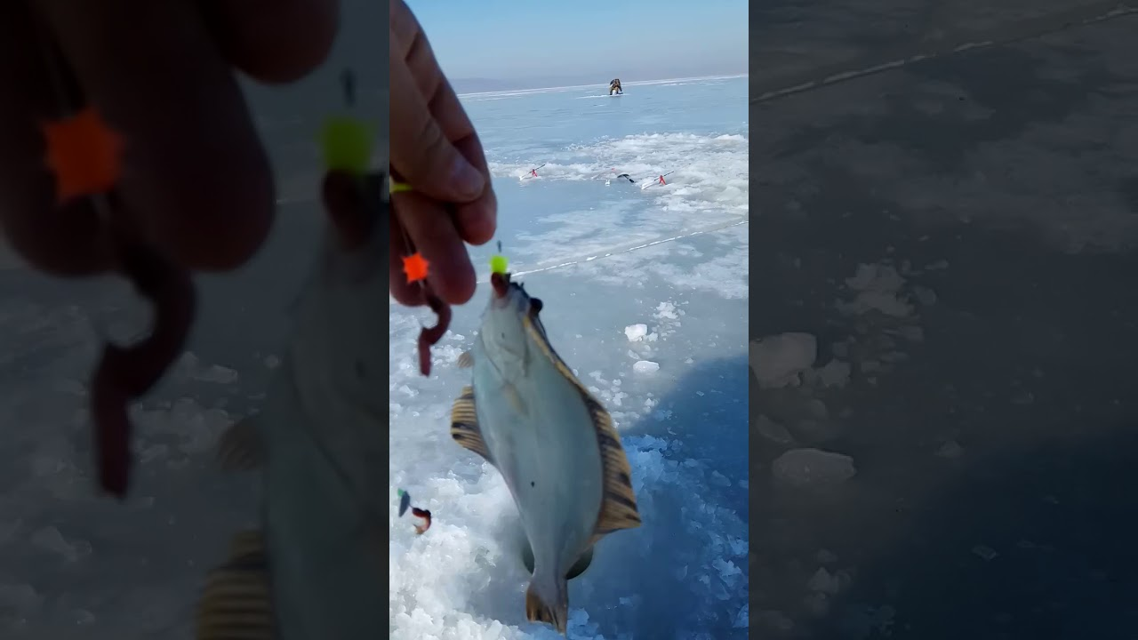 Зимняя рыбалка на камбалу в приморье