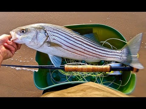 Big Surf Fly Fishing A Striped Bass Blitz