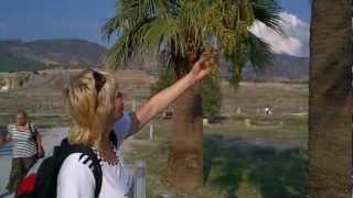 Финиковые пальмы Palms in Turkey Turkish Palms trees